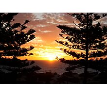 Trees in the sunset Photographic Print