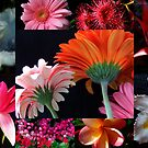 """Flower Collage"" by debsphotos"