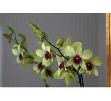 Orchid Flower Mirrored Image Photographic Print