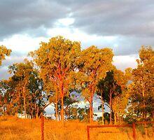 Golden Bush Sunset by Roanne