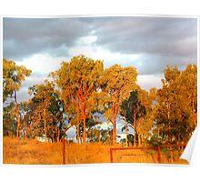 Golden Bush Sunset Poster