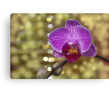 Purple Orchid Flower Canvas Print