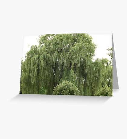 A Green Weeping Willow Greeting Card