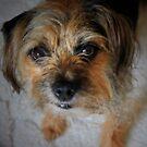 Hi My Name Is Ollie by leonie7
