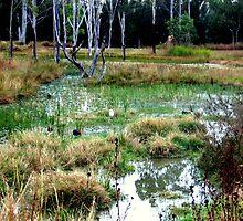 Lush Swamp by Roanne