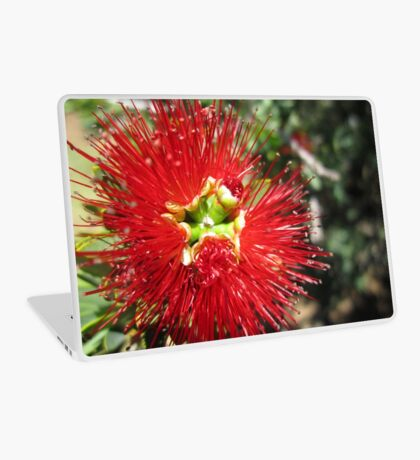 Bottle brush flower Laptop Skin
