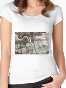 Great Blue Heron hunting Women's Fitted Scoop T-Shirt