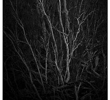 Trees in Flinders-19 by jiashu xu
