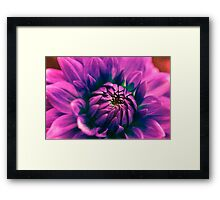 Opening flower Framed Print