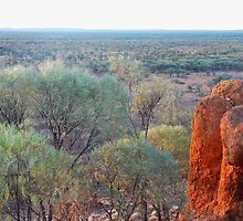 Mulga country near Quilpie, Qld by Speedy