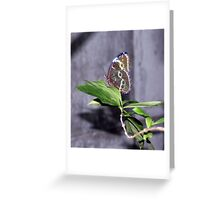 Elusive beauty Greeting Card