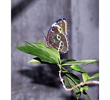 Elusive beauty Photographic Print