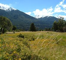 Campo Silvestre - Parque Nacional de los Alerces - Patagonia Argentina by Martín Fernández