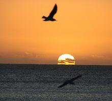 Sunset at Brighton by elphonline