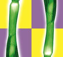 Spring onion by Fabulosa Designs Tony Hardy-vanDoorn