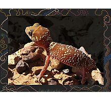 Barking Gecko mark 2 Photographic Print