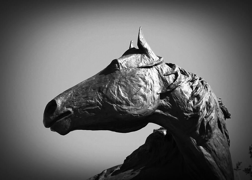 Rodeo Houston by Susan Zohn