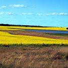 Canola somewhere between Dunkeld & Ballarat by Bev Pascoe