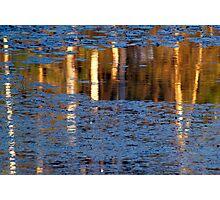 Reflected Birch Photographic Print