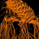 Pine Cone in the Fire by RealPainter
