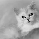 Kitty by Dean Bailey