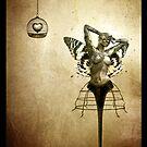 Scream of a Butterfly by Jacky