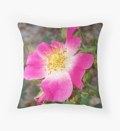 Swamp Rose (Rosa palustris var. scandens) and friend Throw Pillow