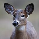So forlorn - White-tailed Deer by Jim Cumming
