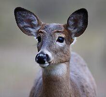 Deer girl...so forlorn - White-tailed Deer by Jim Cumming