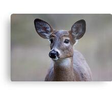 Deer girl...so forlorn - White-tailed Deer Metal Print