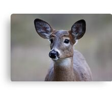 So forlorn - White-tailed Deer Canvas Print