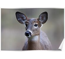 So forlorn - White-tailed Deer Poster