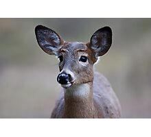 Deer girl...so forlorn - White-tailed Deer Photographic Print