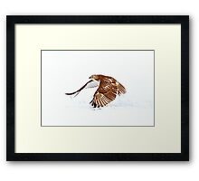 Red-tailed Hawk - Uprising Framed Print