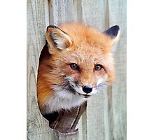 Red Fox Hole Photographic Print