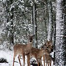 Sharing a Meal by Sharon Morris