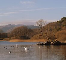 windermere, late afternoon by kiran mulholland