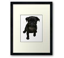 Nala the Pointless Pug Framed Print