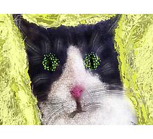 Sillycat! Photographic Print