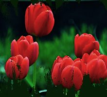 Tiptoe through the Tulips by lynn carter