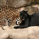 Purfect Friends  by Sharon Morris