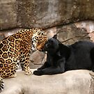 Purrfect Friends  by Sharon Morris