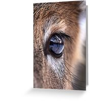 Now thats an eyefull! - White-tailed Deer Greeting Card