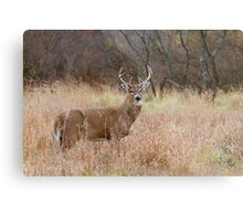 Which way did she go? - White-tailed Buck Metal Print