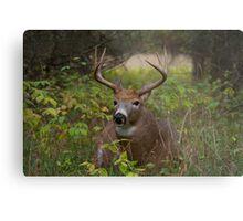 Bullet Buck Takes a Break - White-tailed Deer Metal Print