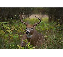 Bullet Buck Takes a Break - White-tailed Deer Photographic Print
