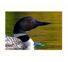 Loon closeup - Common Loon Art Print