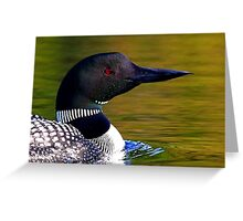 Loon closeup - Common Loon Greeting Card