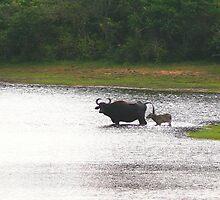 national park (sri-lanka) by KaterinaSam