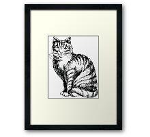 Pretty Kitty Cat Framed Print
